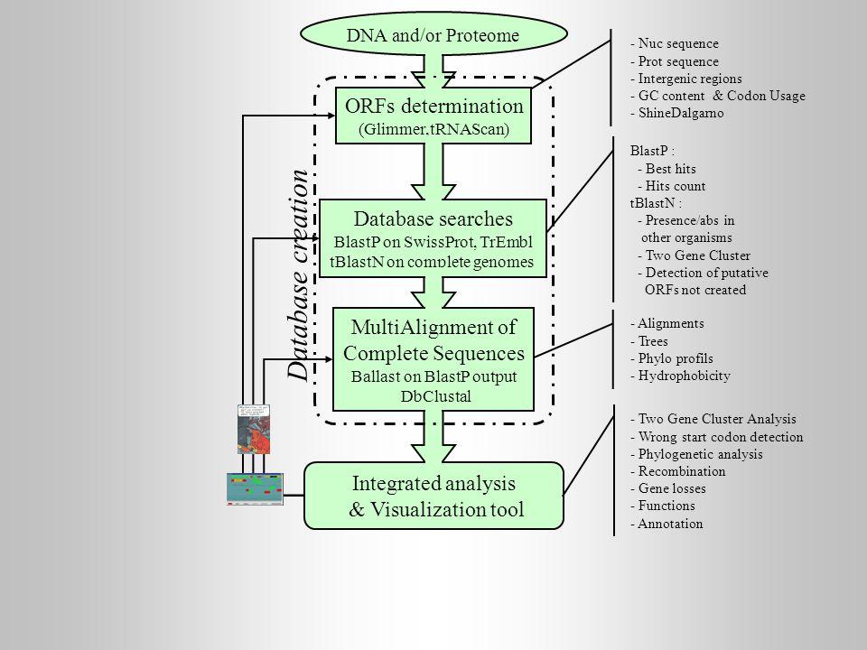 Database creation ORFs determination Database searches