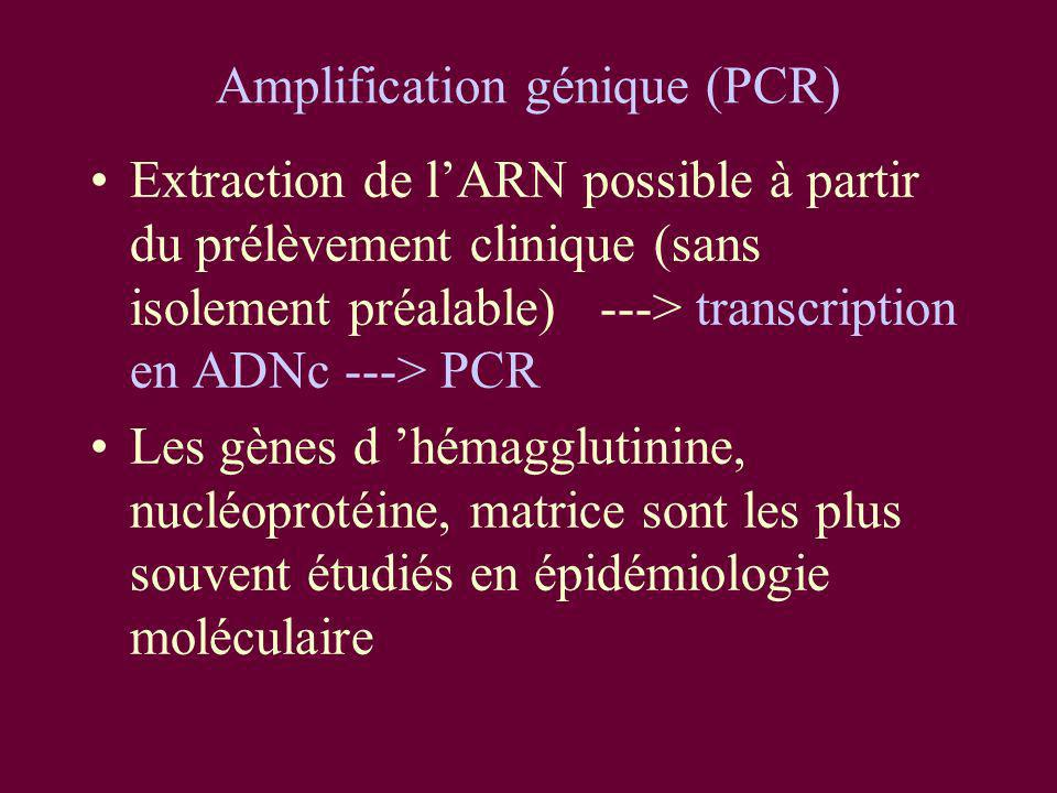 Amplification génique (PCR)