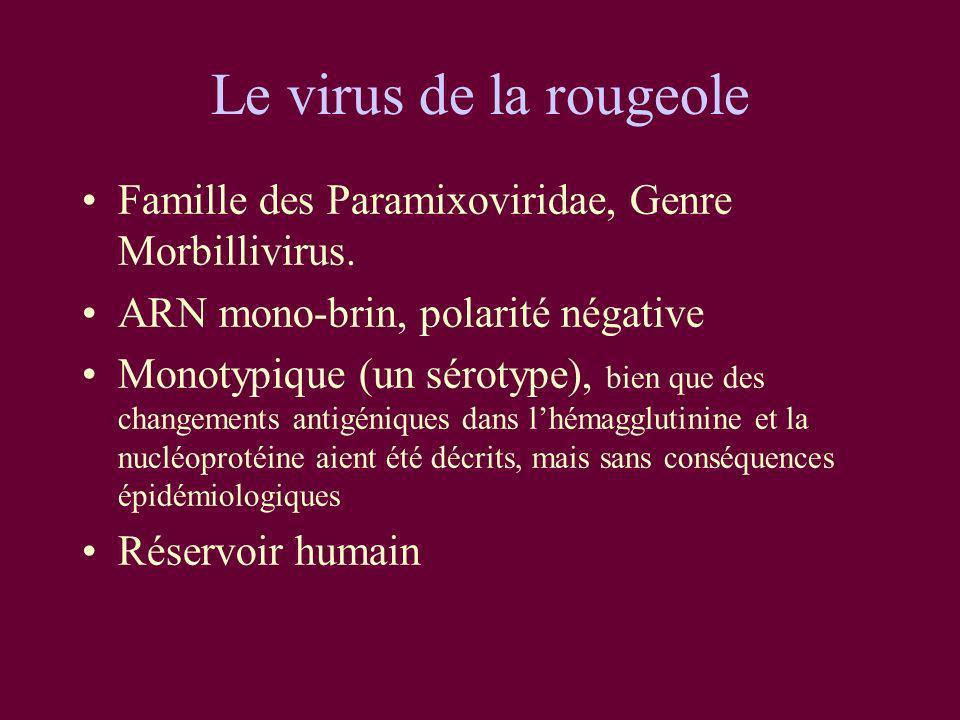 Le virus de la rougeole Famille des Paramixoviridae, Genre Morbillivirus. ARN mono-brin, polarité négative.