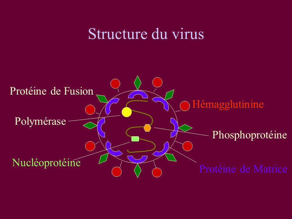 Structure du virus Protéine de Fusion Hémagglutinine Polymérase