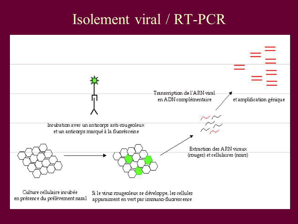 Isolement viral / RT-PCR