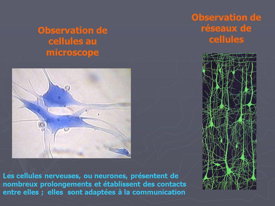 Observation de réseaux de cellules