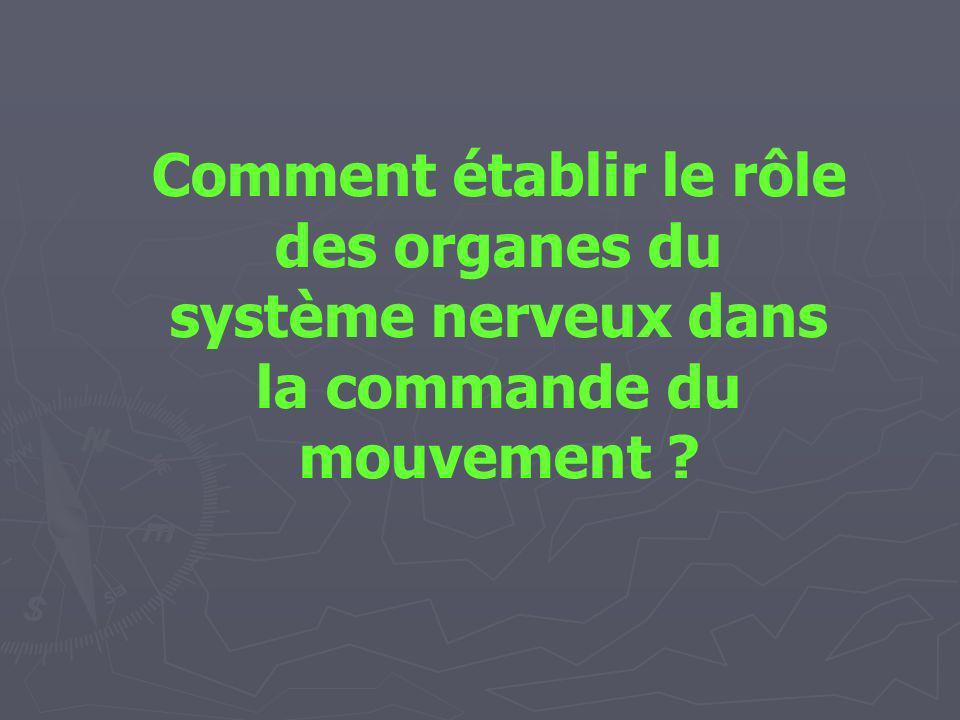 Comment établir le rôle des organes du système nerveux dans la commande du mouvement