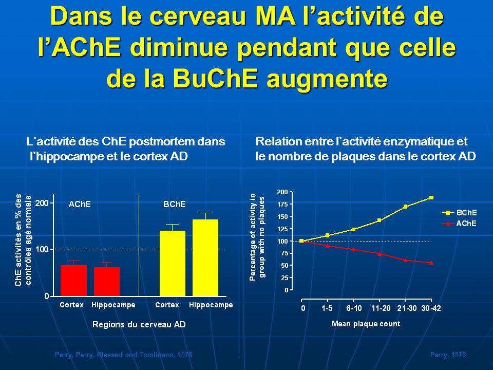 Dans le cerveau MA l'activité de l'AChE diminue pendant que celle de la BuChE augmente