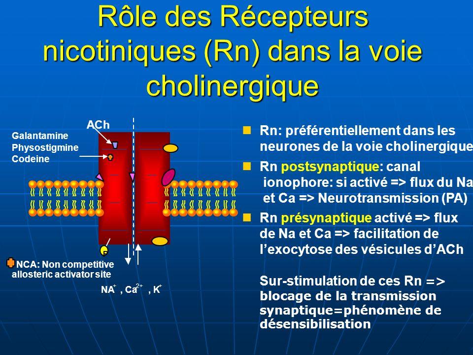 Rôle des Récepteurs nicotiniques (Rn) dans la voie cholinergique