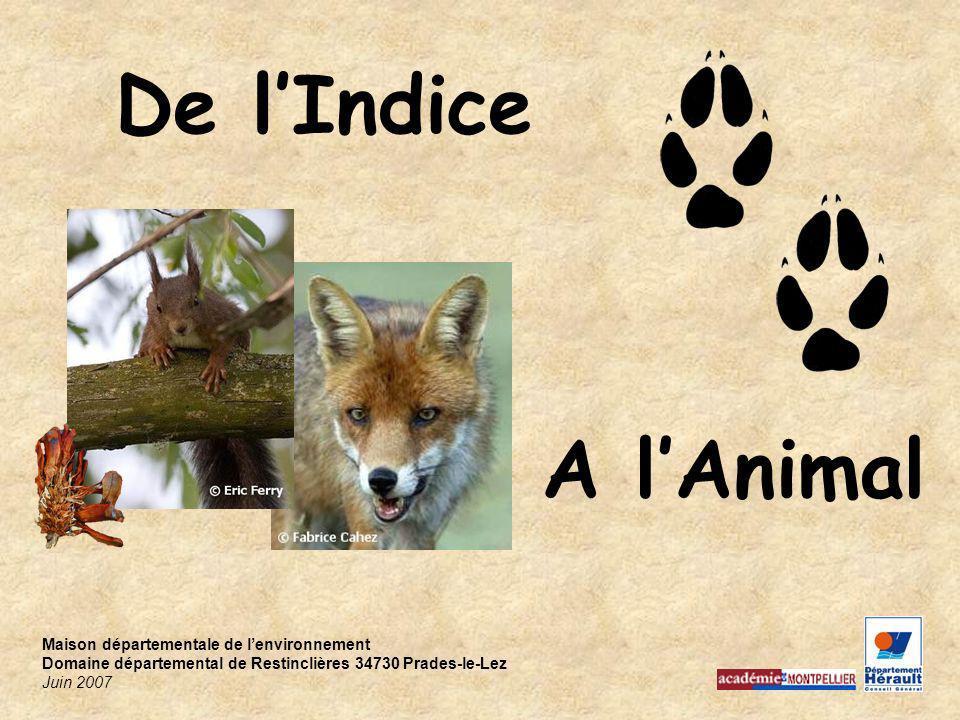 De l'Indice A l'Animal Maison départementale de l'environnement