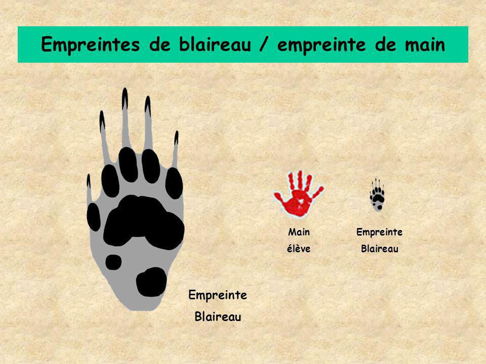 Empreintes de blaireau / empreinte de main