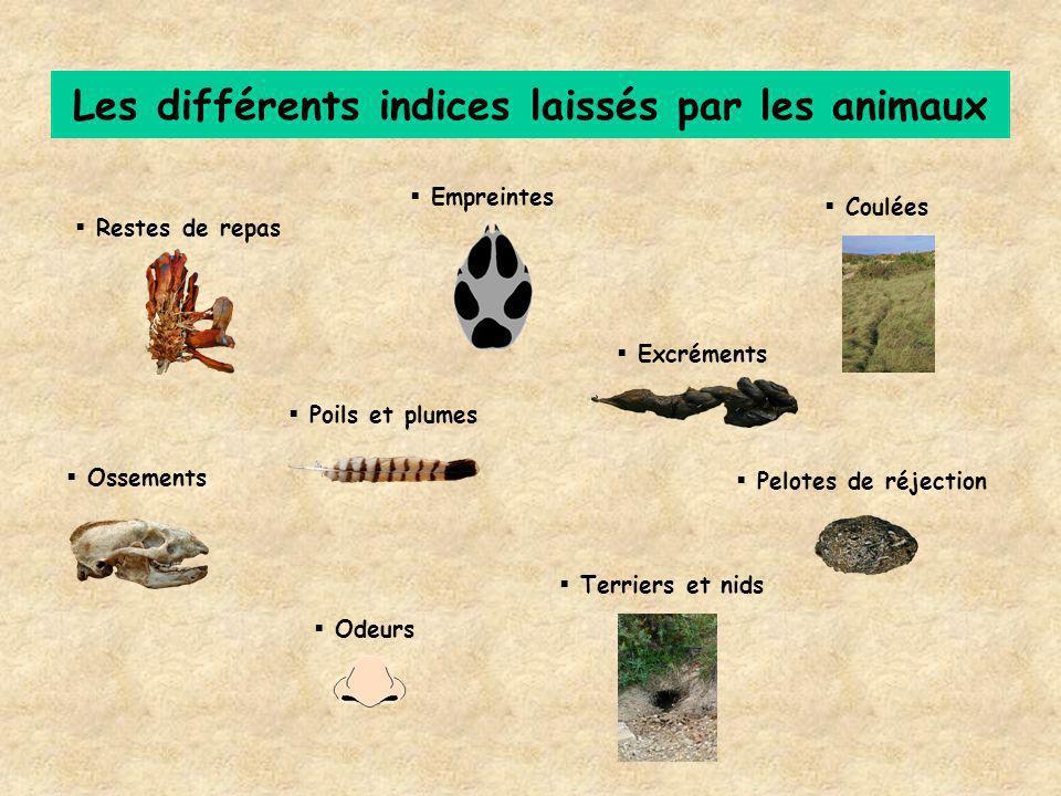 Les différents indices laissés par les animaux