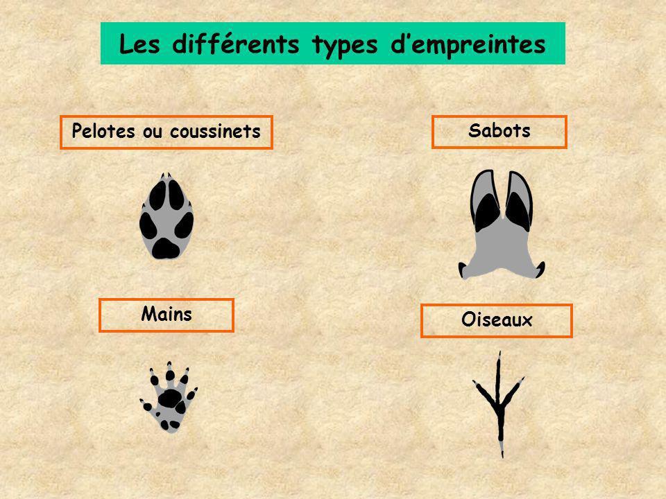 Les différents types d'empreintes