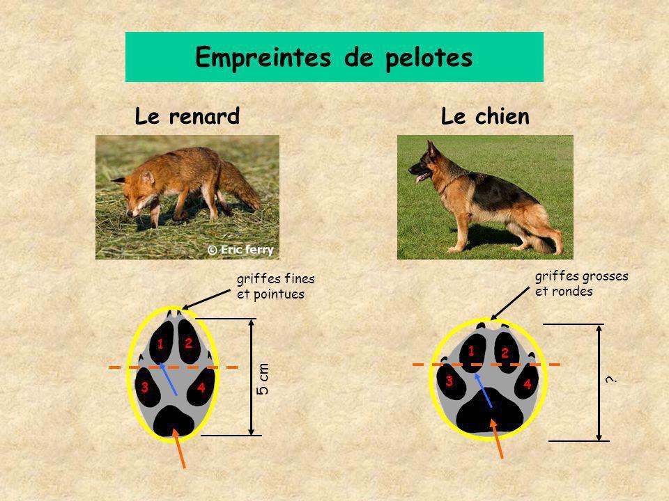 Empreintes de pelotes Le renard Le chien 5 cm