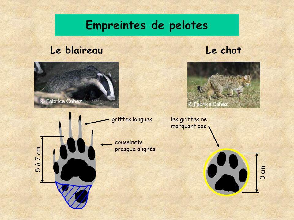 Empreintes de pelotes Le blaireau Le chat 5 à 7 cm 3 cm