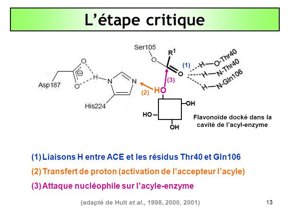 Flavonoïde docké dans la cavité de l'acyl-enzyme
