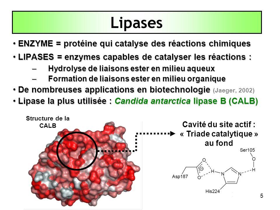 Cavité du site actif : « Triade catalytique » au fond