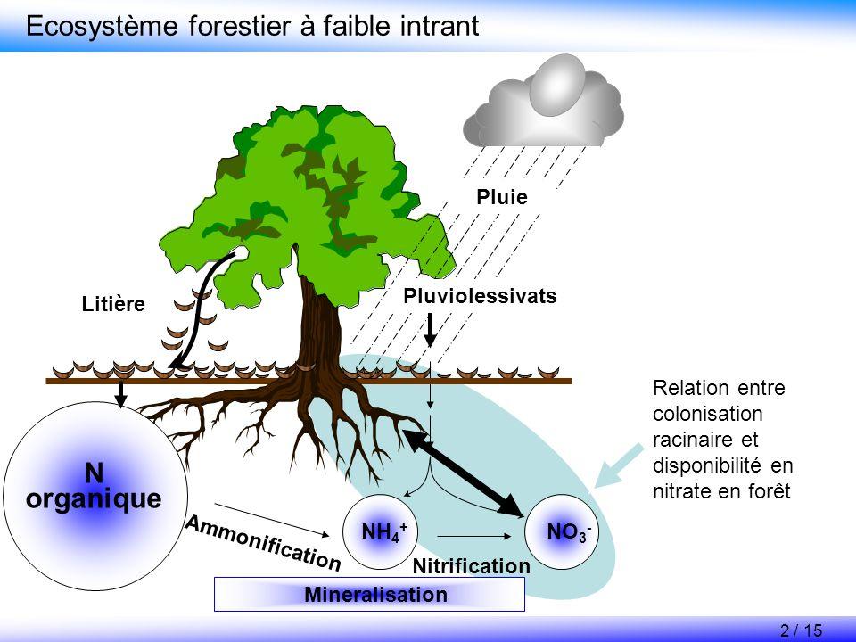 Ecosystème forestier à faible intrant
