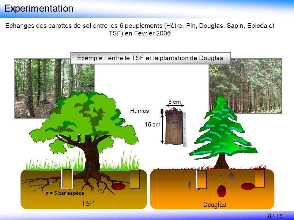 Exemple : entre le TSF et la plantation de Douglas