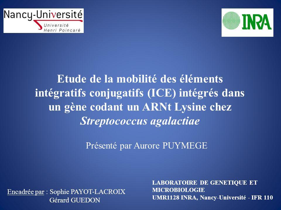Etude de la mobilité des éléments intégratifs conjugatifs (ICE) intégrés dans un gène codant un ARNt Lysine chez Streptococcus agalactiae
