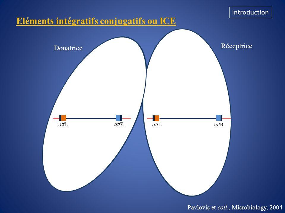Eléments intégratifs conjugatifs ou ICE