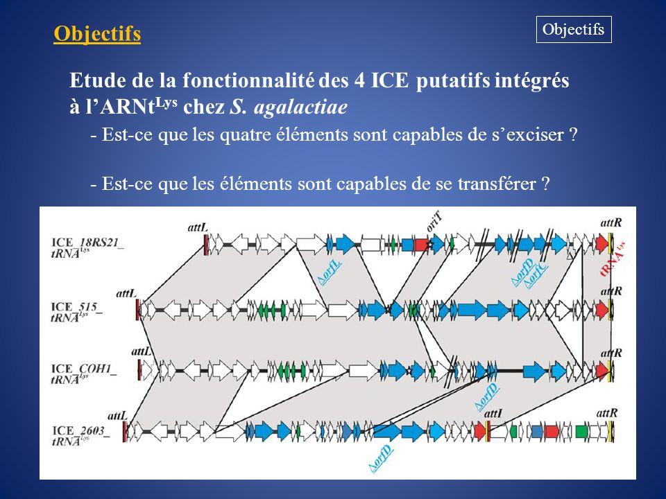 Objectifs Objectifs. Etude de la fonctionnalité des 4 ICE putatifs intégrés à l'ARNtLys chez S. agalactiae.