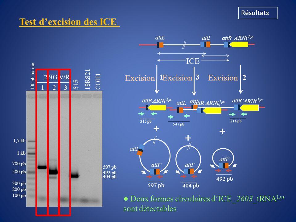 Test d'excision des ICE