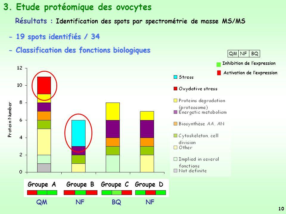 3. Etude protéomique des ovocytes