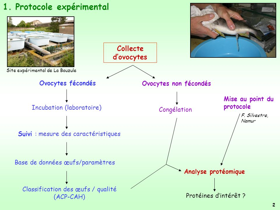 1. Protocole expérimental