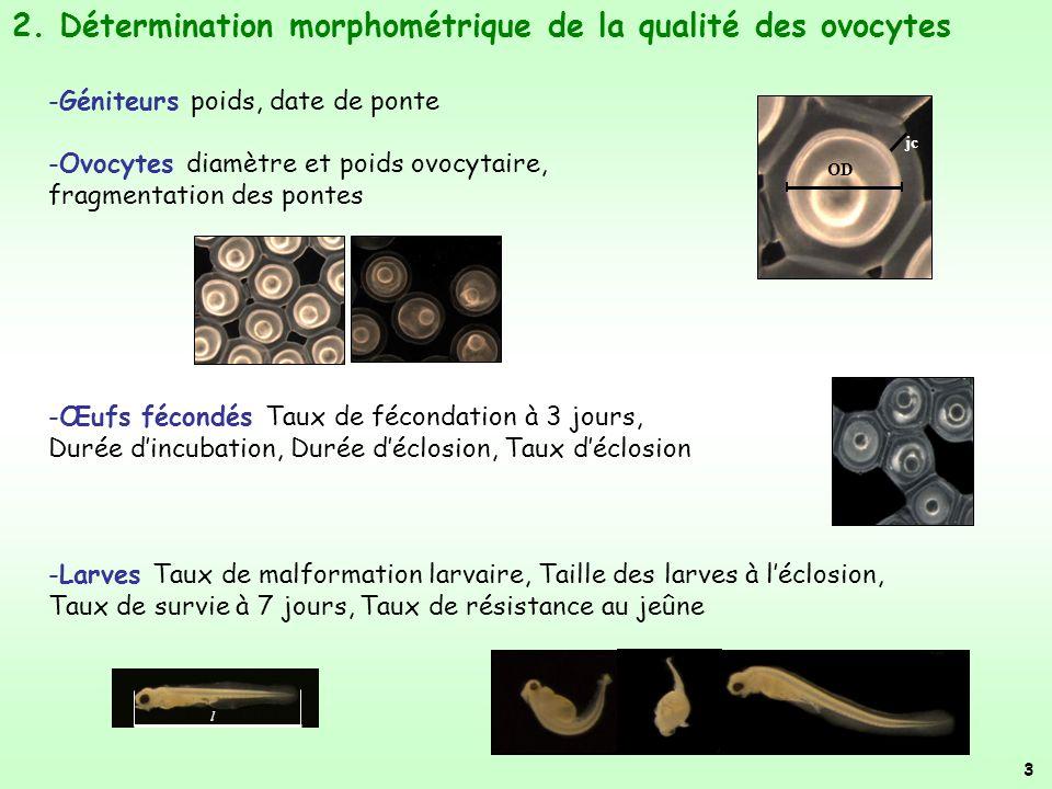 2. Détermination morphométrique de la qualité des ovocytes