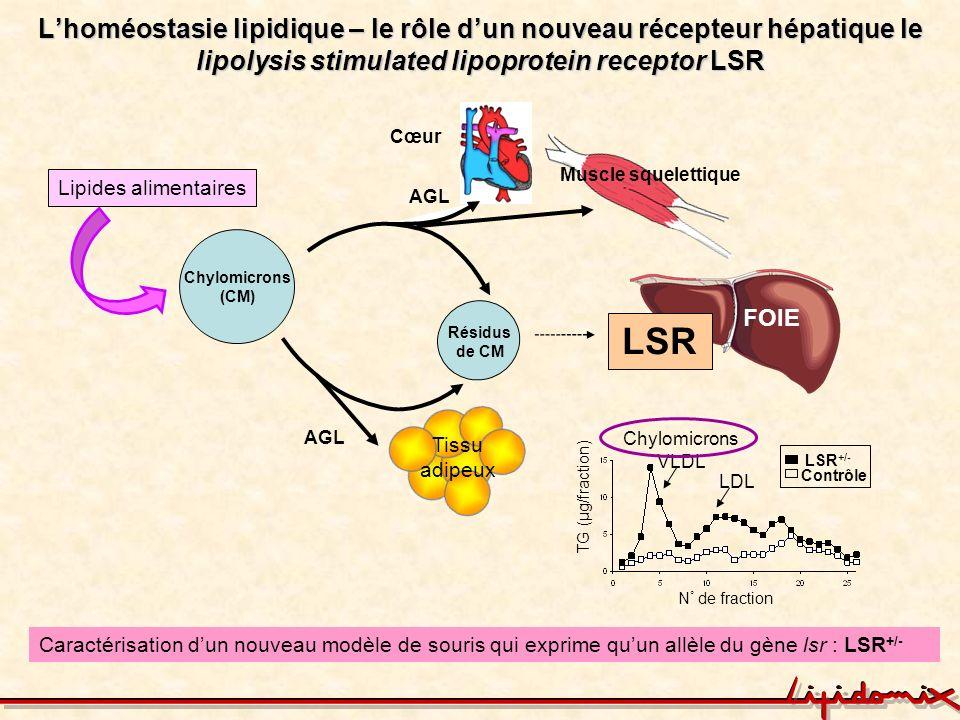 L'homéostasie lipidique – le rôle d'un nouveau récepteur hépatique le lipolysis stimulated lipoprotein receptor LSR
