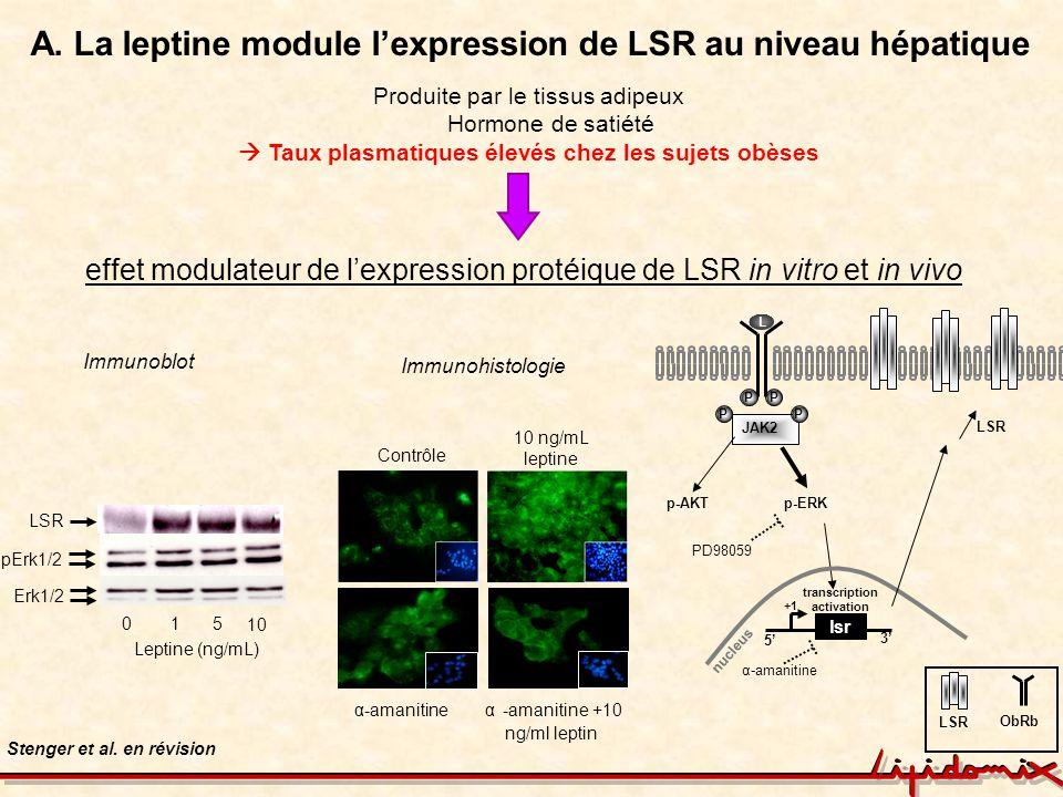 A. La leptine module l'expression de LSR au niveau hépatique