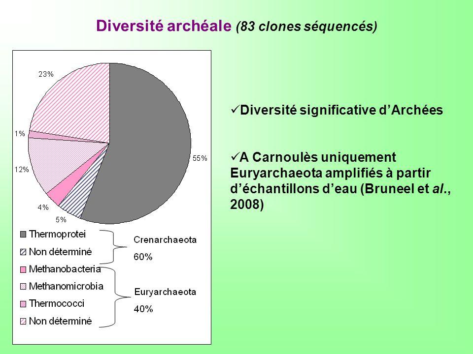 Diversité archéale (83 clones séquencés)