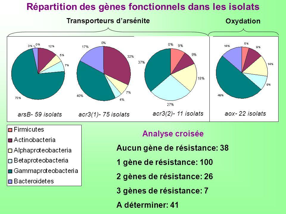 Répartition des gènes fonctionnels dans les isolats