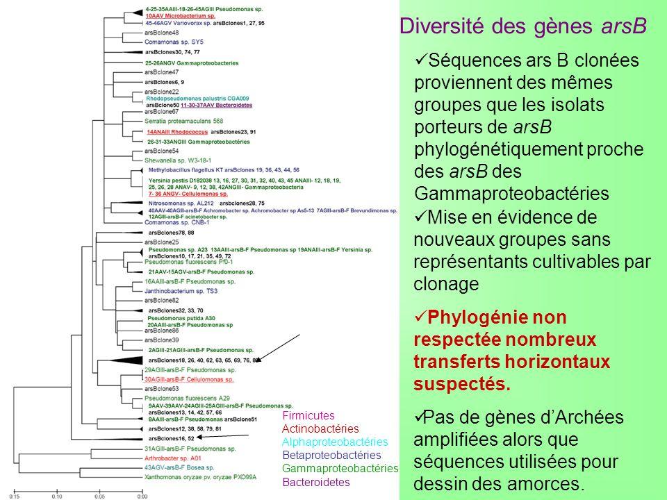 Diversité des gènes arsB