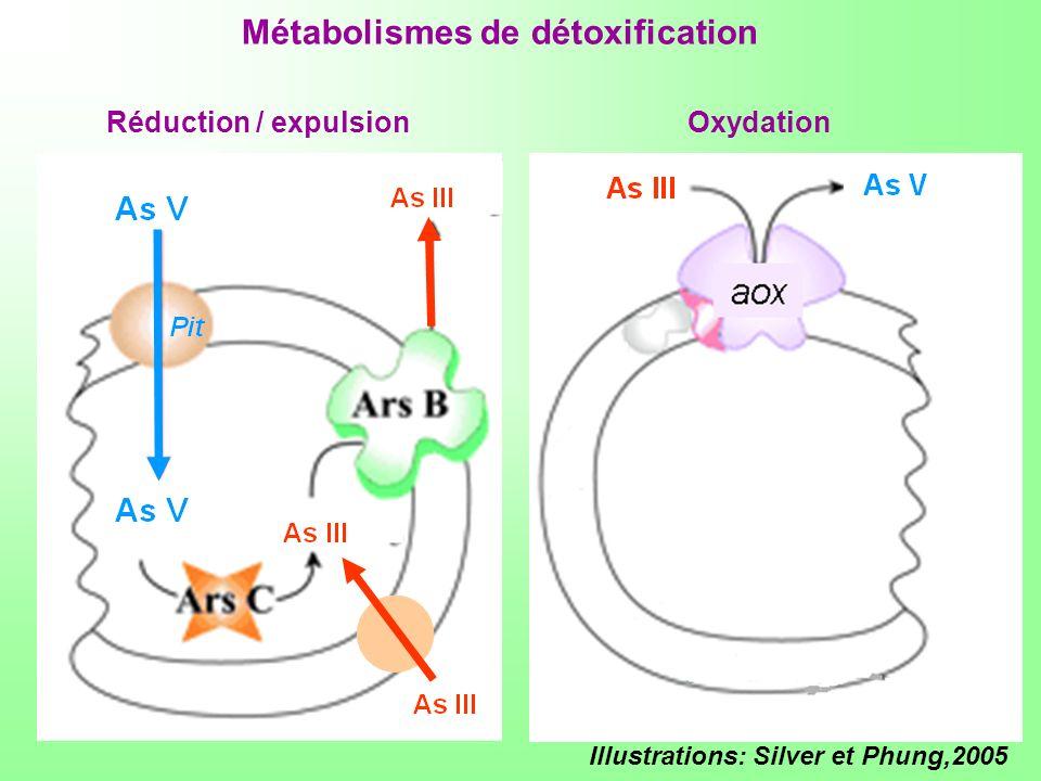 Métabolismes de détoxification
