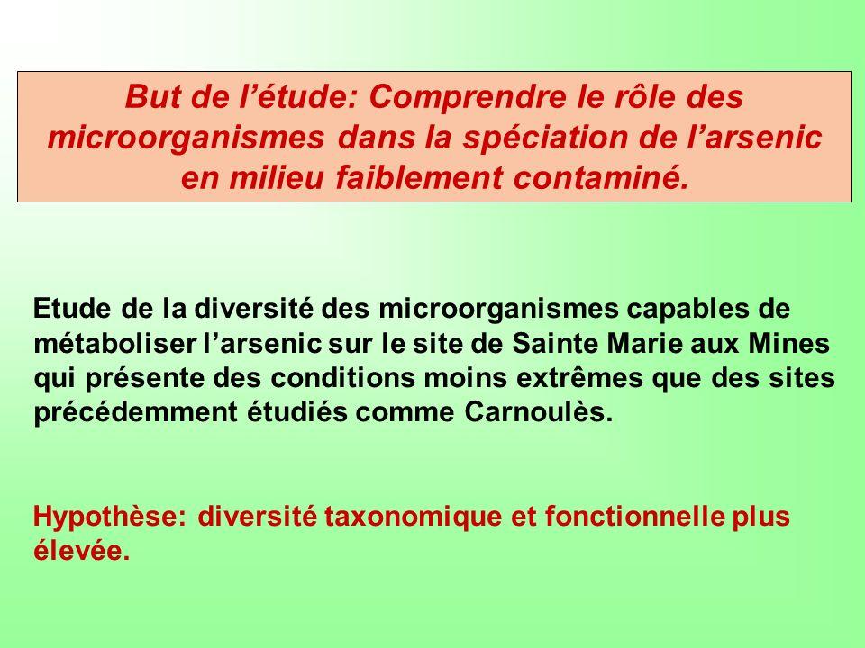 But de l'étude: Comprendre le rôle des microorganismes dans la spéciation de l'arsenic en milieu faiblement contaminé.