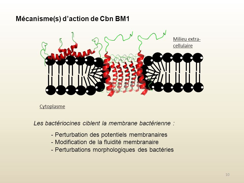 Mécanisme(s) d'action de Cbn BM1