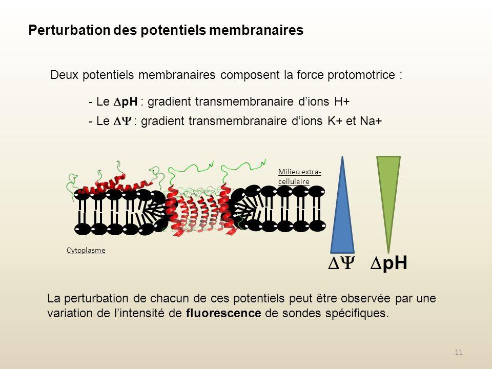  pH Perturbation des potentiels membranaires