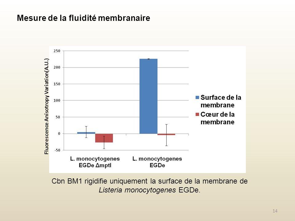 Mesure de la fluidité membranaire