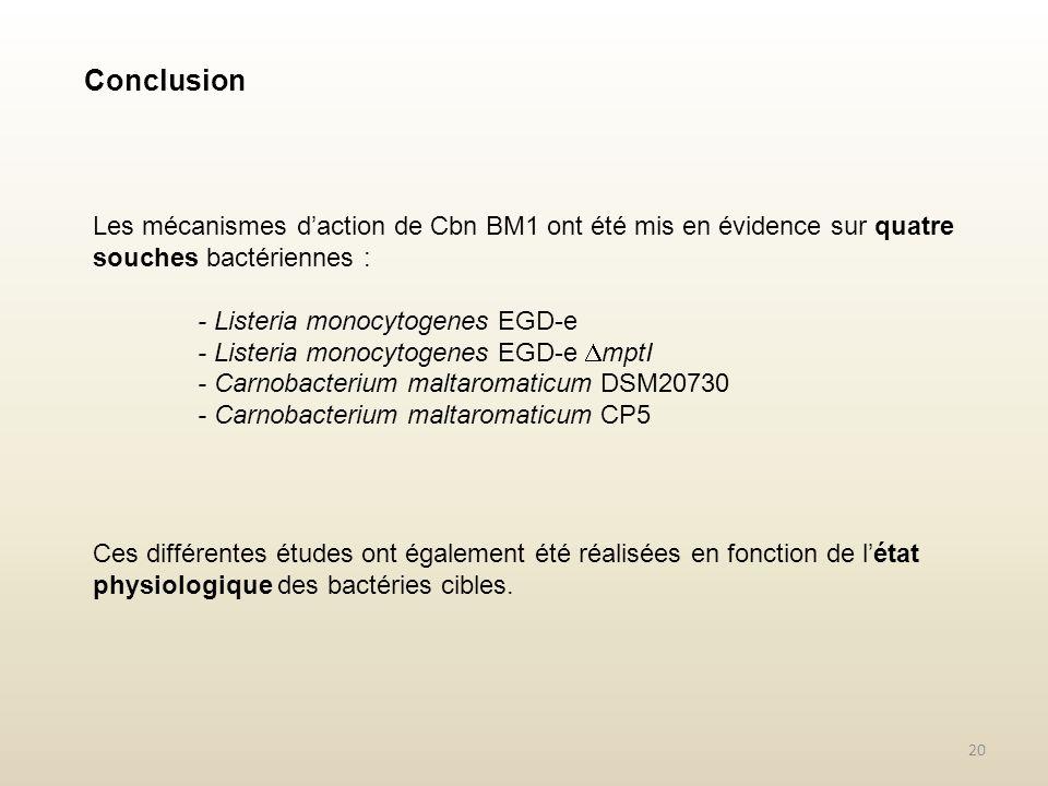 Conclusion Les mécanismes d'action de Cbn BM1 ont été mis en évidence sur quatre souches bactériennes :