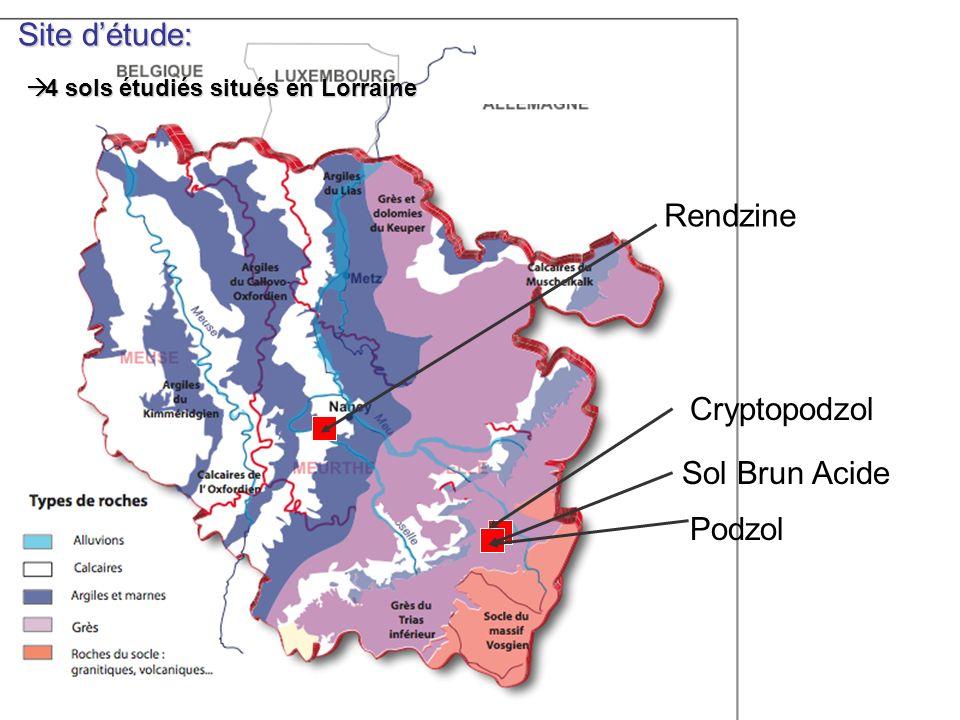 Site d'étude: Rendzine Cryptopodzol Sol Brun Acide Podzol