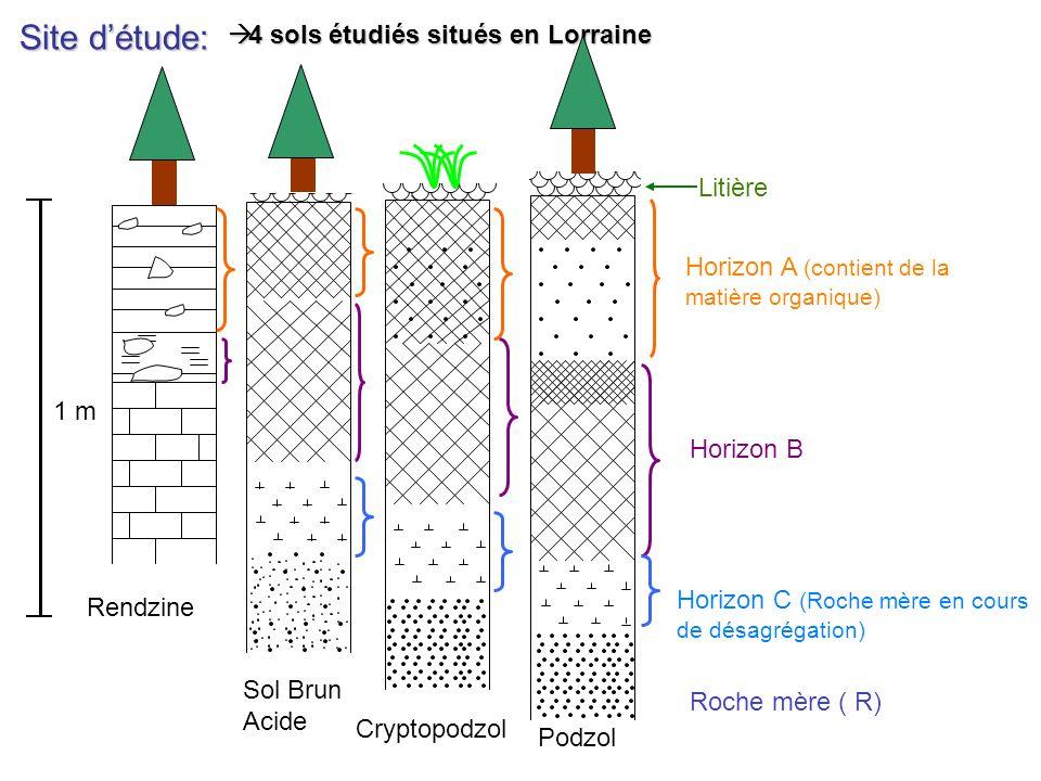 Site d'étude: 4 sols étudiés situés en Lorraine Litière