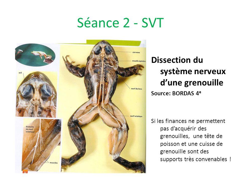 Séance 2 - SVT Dissection du système nerveux d'une grenouille