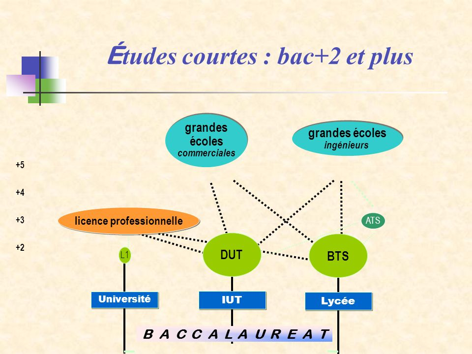 Études courtes : bac+2 et plus