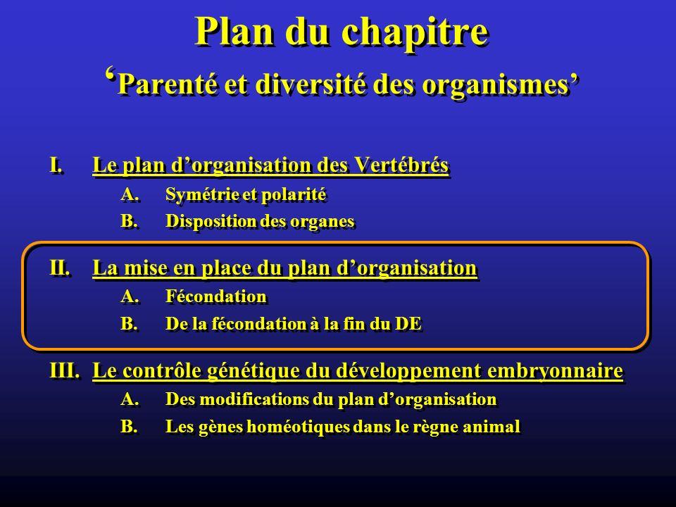 Plan du chapitre 'Parenté et diversité des organismes'