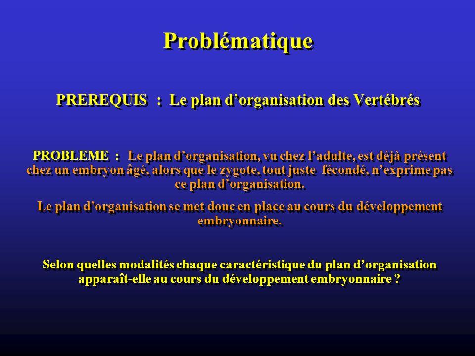 PREREQUIS : Le plan d'organisation des Vertébrés