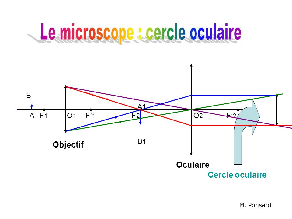 Le microscope : cercle oculaire