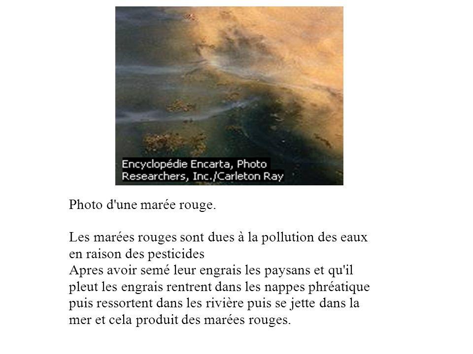 Photo d une marée rouge. Les marées rouges sont dues à la pollution des eaux en raison des pesticides.