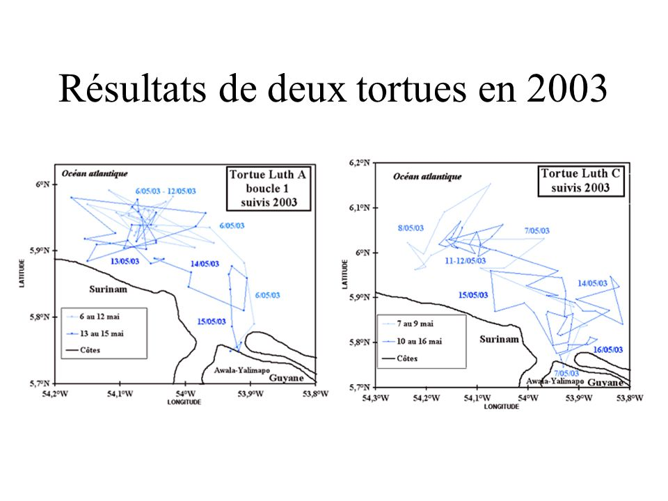 Résultats de deux tortues en 2003