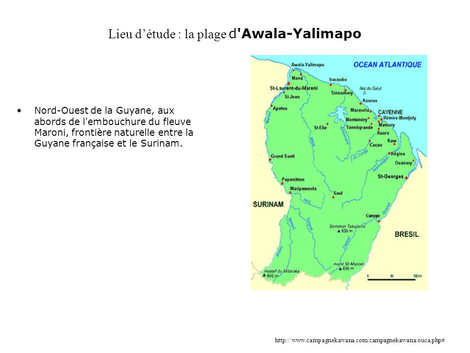 Lieu d'étude : la plage d Awala-Yalimapo
