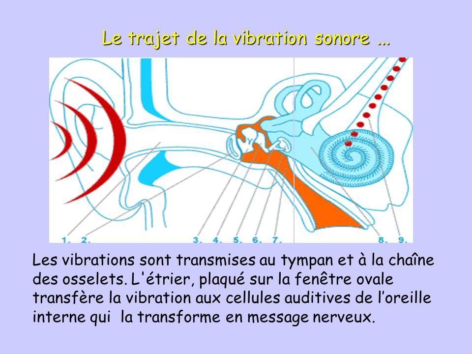 Le trajet de la vibration sonore ...