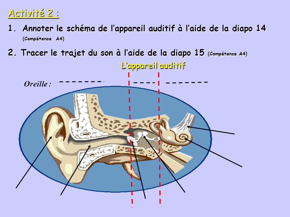 L'appareil auditif Oreille : Activité 2 : Annoter le schéma de l'appareil auditif à l'aide de la diapo 14.