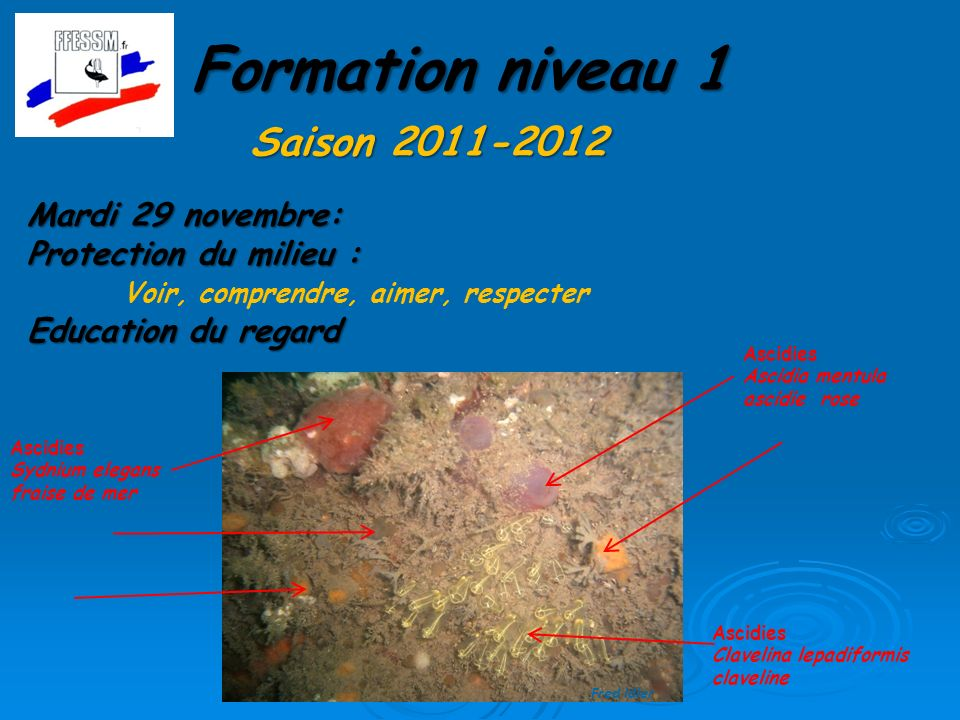 Formation niveau 1 Saison 2011-2012 Mardi 29 novembre: